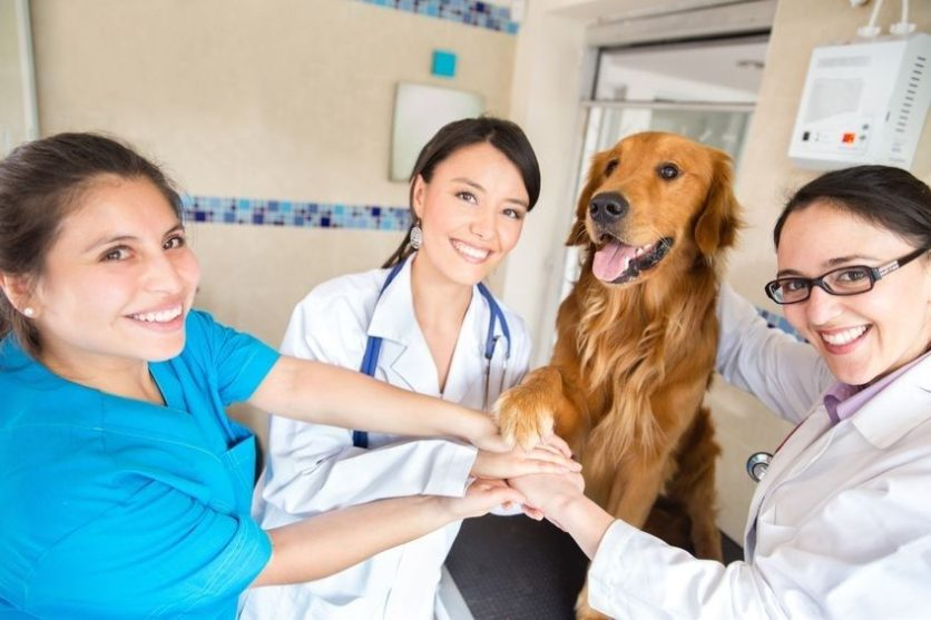 La Grange KY Veterinarian Doctor and Pet Teamwork