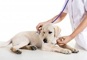 La Grange KY Veterinarian Dog Checkup