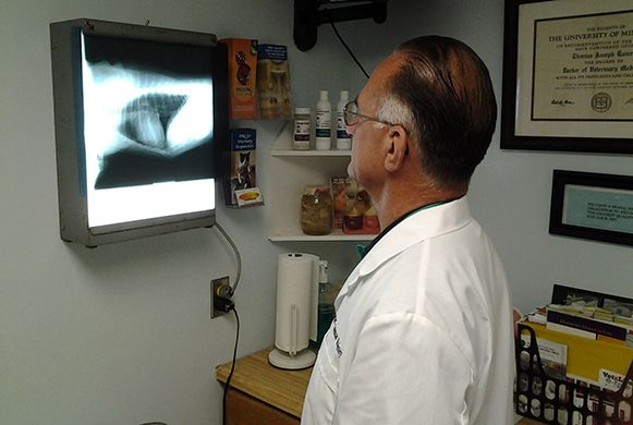 Dr. Rainey Looking at a X-Ray